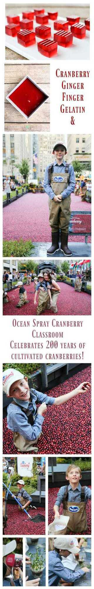 Cranberry Ginger Finger Gelatin and Ocean Spray Cranberry Classroom