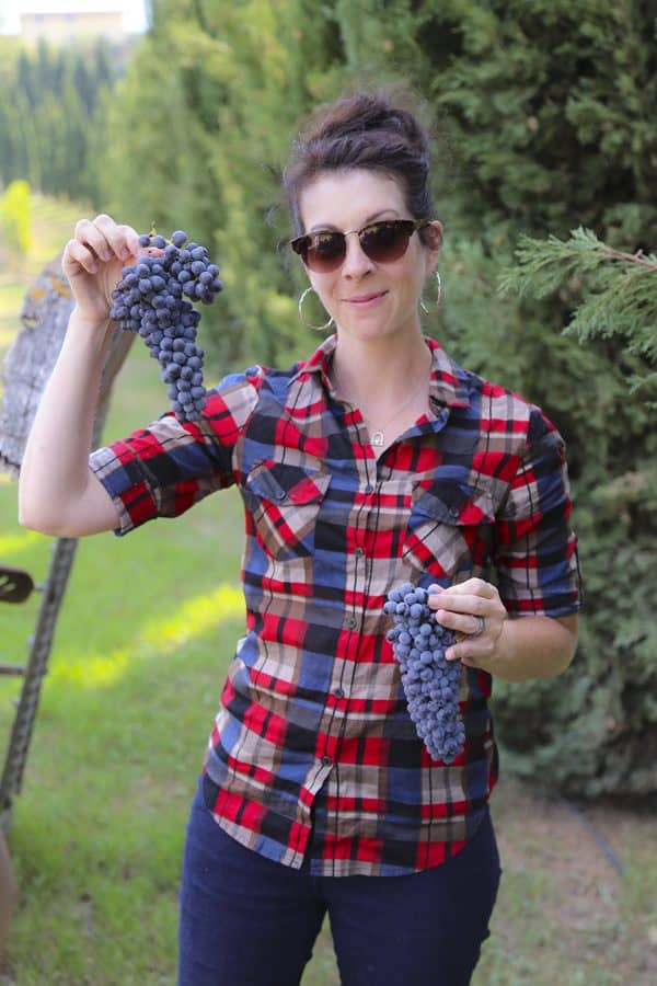 Foodie with Family - Rebecca Lindamood- picking sangiovese grapes with Andrea Meini. These grapes will be made into DaVinci Chianti and make it to market some time next year!