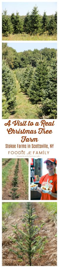 2 Minute Pull Apart Caramel Apples inspired by a visit to a real Christmas Tree Farm: Stokoe Farms in Scottsville, NY.