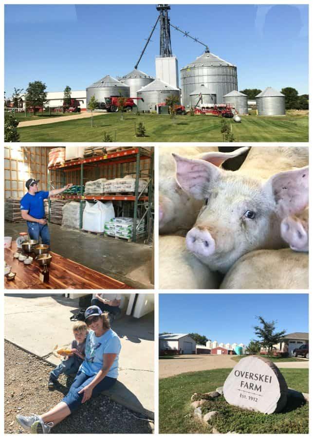 Overskei Farm, South Dakota. Pipestone Veterinary System.
