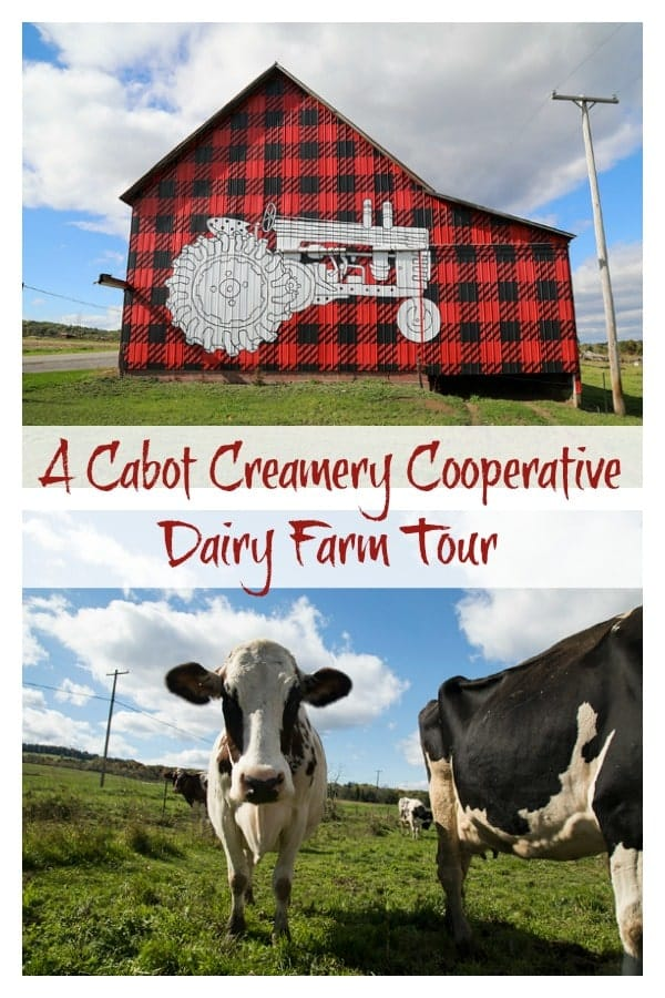 Dellavale Farm Cabot Creamery Cooperative: A Day on the Farm